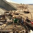 朝早く犬の散歩。海岸ゴミの処理はこれから、でも台風が近づく。