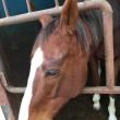 馬の仕事につくために アニベジ奮闘記エピソード292