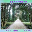 『 常夏の幻の郷暮の夢 』フォト575交心zsk1803