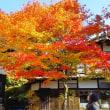 素晴らしい日本の色彩!