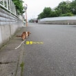 サム爺 ヨタヨタ散歩