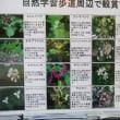 藻岩山 自然豊か‼