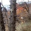 妙義山石門群で自然観察会・・・