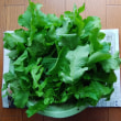 直播き野菜の間引き#2