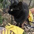 袋の好きな猫?! part 1