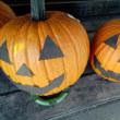 白鳥と道の駅のかぼちゃ