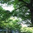 ケヤキ並木の新緑を見下ろせる会場での講座です☆