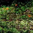 キツネノカミソリ咲く