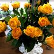 オレンジのバラ。
