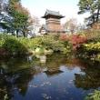 天朝山公園の紅葉 2 2017.11.13
