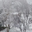 初雪初冠雪