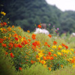 里山ガーデンの花々