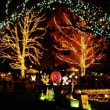 彩の国 国営武蔵丘陵森林公園のスターライトイルミネーション