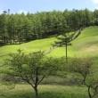 入笠山湿原で可憐なスズランの大群落を満喫