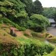 林昌寺のサツキ