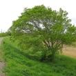 緑鮮やか散歩道