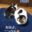 猫とプリンの日