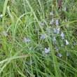 大好きなブルーのお花たち・・・✿
