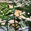 6月の我が庭