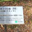 文化会館庭園(武雄市紅葉) (^O^)/~~♪