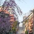 桜と坂の東京散歩 その3《東京トレッキング》