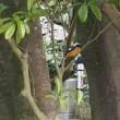 仙巌園(磯庭園)と桜島