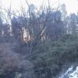 雑木林の朝