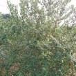 この木、何の木?