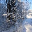 今日の天気 昨日は大雪 朝は晴れ また曇って来ました。