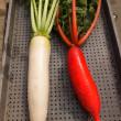 今日の朝市はサラダ春菊や水菜を出荷…。