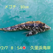 笑転爺の釣行記 2月7日☀ 久里浜海岸