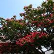 『季節の花』 百日紅