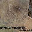 間伐 選木