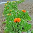 3月の畑 (春の芽吹き)