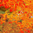 今の時期の冬桜🌸🌸そして出逢いと、サヨナラ。