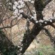 春(^^)