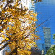 東京駅丸の内北口付近の紅葉・・(2019年1月 まだ葉が残っていました)
