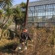 12月16日 活動報告2 修景池周辺の剪定など
