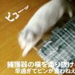 鰤(ぶり)大根弁当/ついつい/デブ猫走る