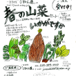 じねん道の「春の山菜セット」いかがですか、ご注文受付中!!1セット:朝堀り竹の子1本、旬の山菜3~4種類=2000円+送料)