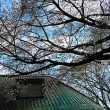 『桜便り』 資料館