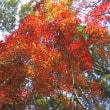 10/17(火)のイキメンニュース~暮らし&身近な法律・判例の情報