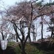 弘前公園外堀桜