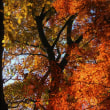 紅葉点景:晩秋の光彩