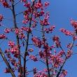 パーソナルカラーも良いけど、春には春の色を着るのも有♪