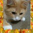 秋を感じる朝(=゚ω゚=)