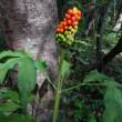 軽井沢の山荘の9月下旬の花