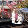 『桜咲く』 大磯駅