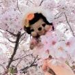 テディ君♪ポリスマンに☆…ジカイノヨテイ~(●´ω`●)