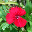 花だより・・・。『大文字草』